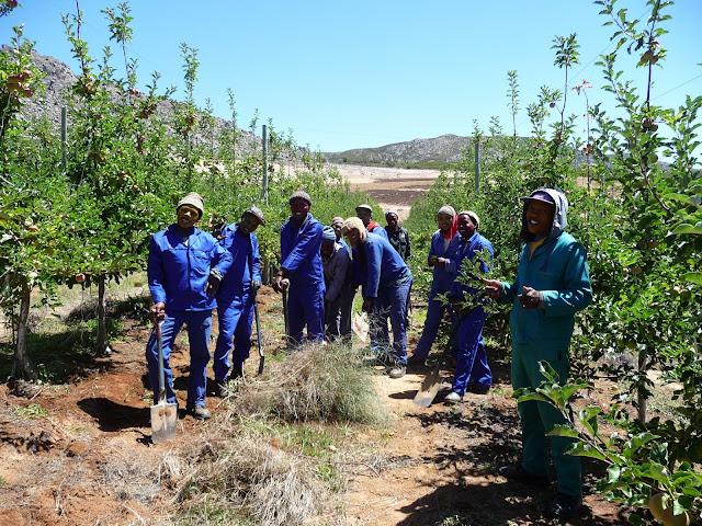 Obstanbau unter fairen Bedingungen in Südafrika