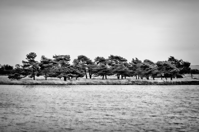 Dorset Nature Reserve in Studland with windswept trees on an island
