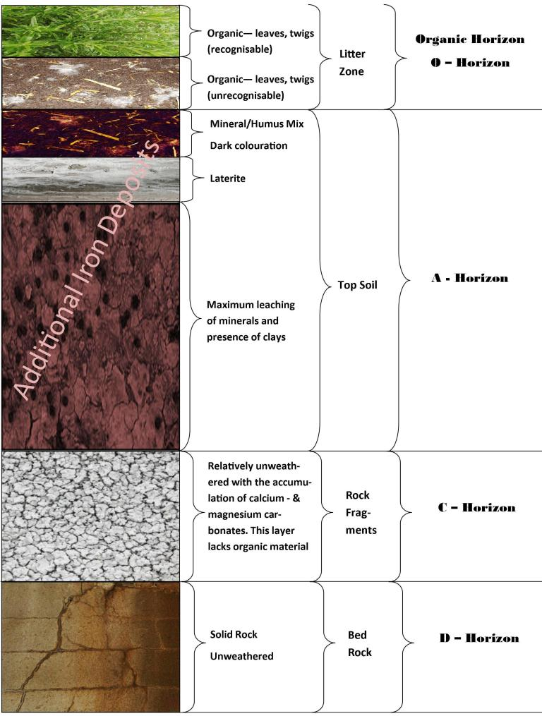 Soil Profile Worksheet. Worksheets. Tutsstar Thousands of ...