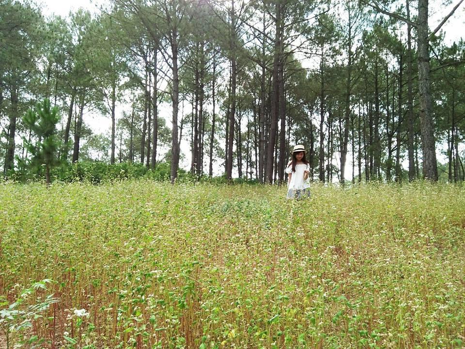 Chụp ảnh tại rừng thông Bản Áng