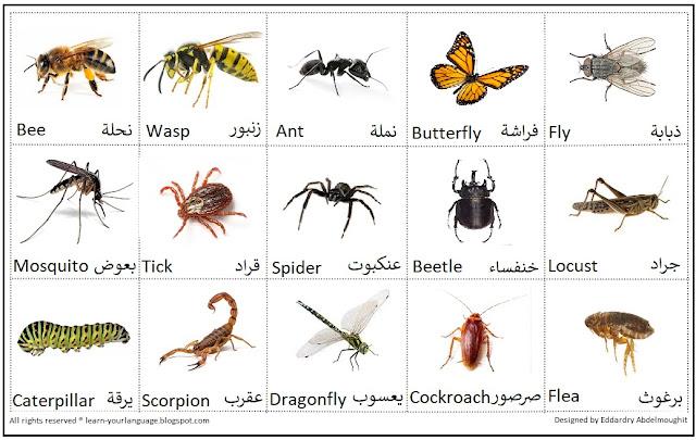 أسماء الحشرات بالإنجليزي Insect names in English