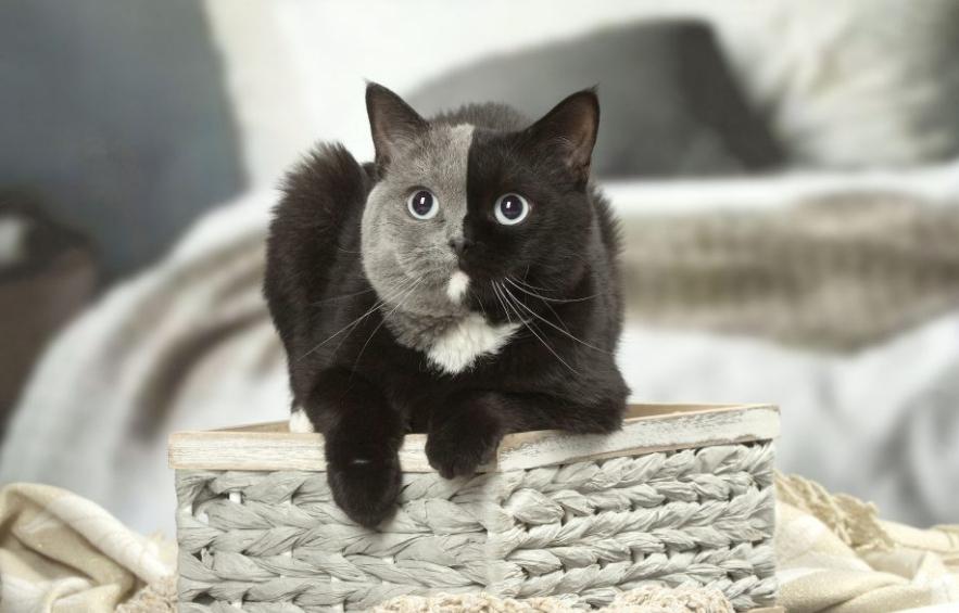 Narnia, il gatto con due facce diventato virale nei Social