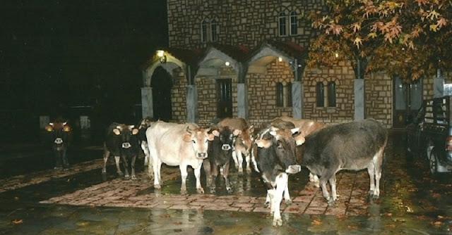 Πρόστιμα μέχρι 1.500 ευρώ για τα ανεπιτήρητα ζώα