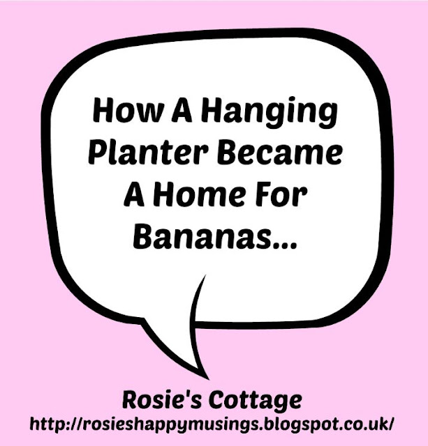 How A Hanging Planter Became A Home For Bananas