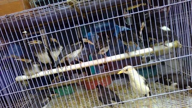 Indonesia darurat perlindungan spesies, Tandatangani Petisi Perlindungan 5 Jenis Burung