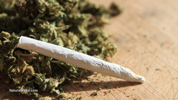 THC from cannabis found to dramatically slow memory loss by protecting brain cells