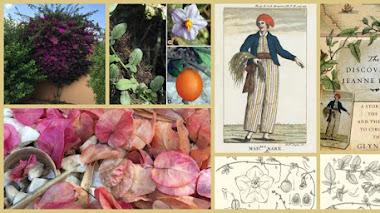 Una exploración botánica con nombre de mujer: Jeanne Baret