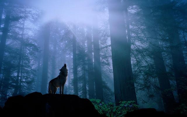 Hình nền một chú sói đơn độc