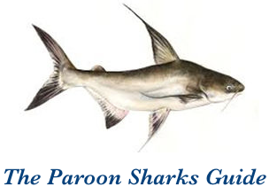 The Paroon Sharks Guide
