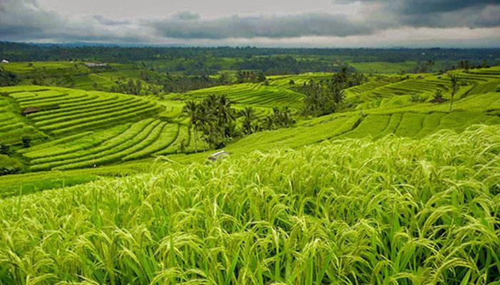 Perbedaan Pertanian Amerika Dan Indonesia