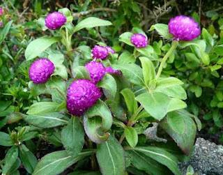 nama bunga hias dan gambarnya,bunga hias termahal,nama nama bunga,nama bunga hias dan nama latinnya,tanaman bunga,kaidah,daftar nama bunga lengkap,kumpulan macam macam bunga lengkap,