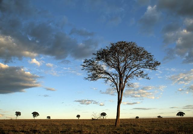 Nature in steep decline due to human activities: WWF Living Planet Report 2018