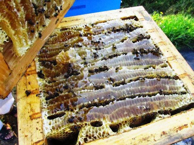 Εκπληκτικό μελισσοκομικό βίντεο από την μακρινή Ιαπωνία
