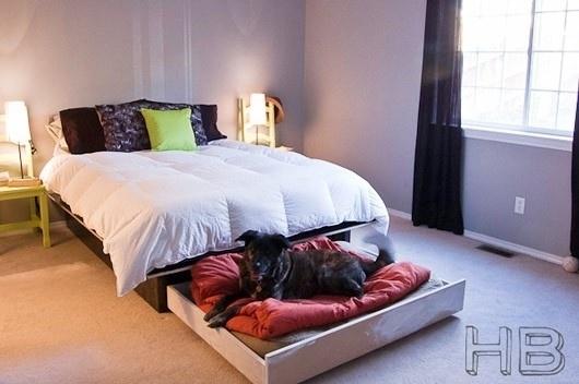 Dog Pound Beds