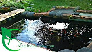 jasa pembuatan kolam koi , jasa pembuatan kolam minimalis