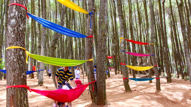 hutan pinus pengger dlingo bantul