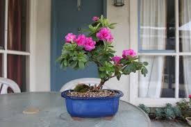 How to Plant Azaleas With Peat Moss