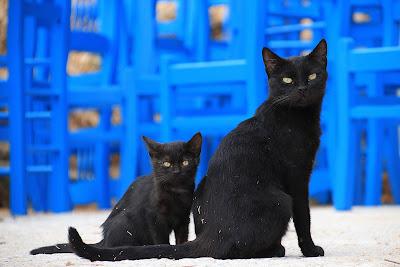 Best Black Cat Names