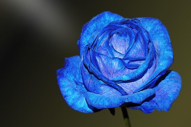 hoa hong xanh dep nhat