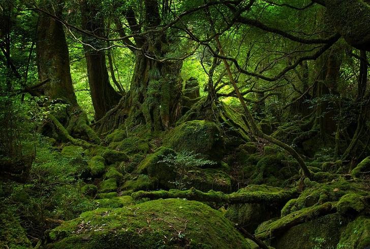 Indonesia, Negara dengan Hutan Terluas di Kawasan Asia