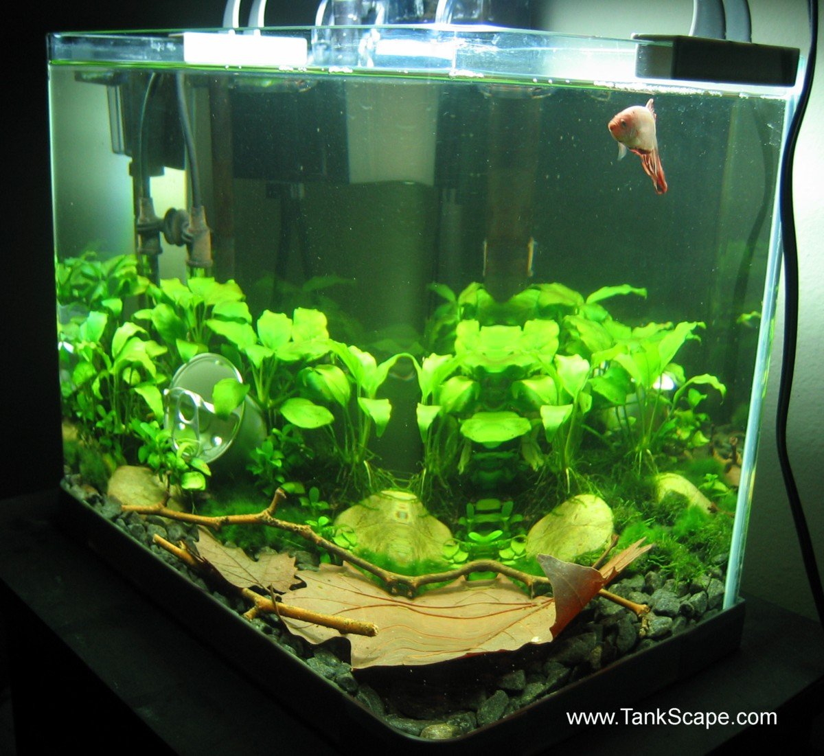 Betta fish tank setup ideas that make a statement for Fish for a 10 gallon tank