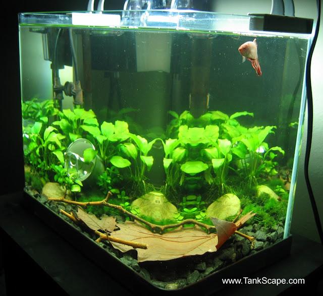 Spiffy pet products betta fish tank setup ideas that make for 10 gallon fish tank stocking ideas