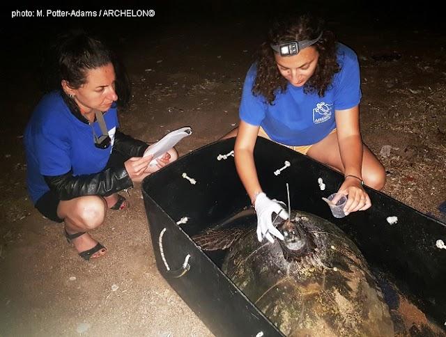 Δορυφορικοί πομποί τοποθετήθηκαν σε θαλάσσιες χελώνες καρέτα στο νότιο Κυπαρισσιακό Κόλπο