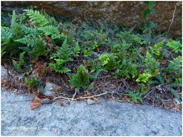 Acumulación sobre piedra - Chacra Educativa Santa Lucía
