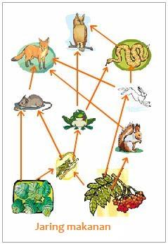 Pengertian Jaring Jaring Kehidupan : pengertian, jaring, kehidupan, Pengertian, Jaring-Jaring, Makanan