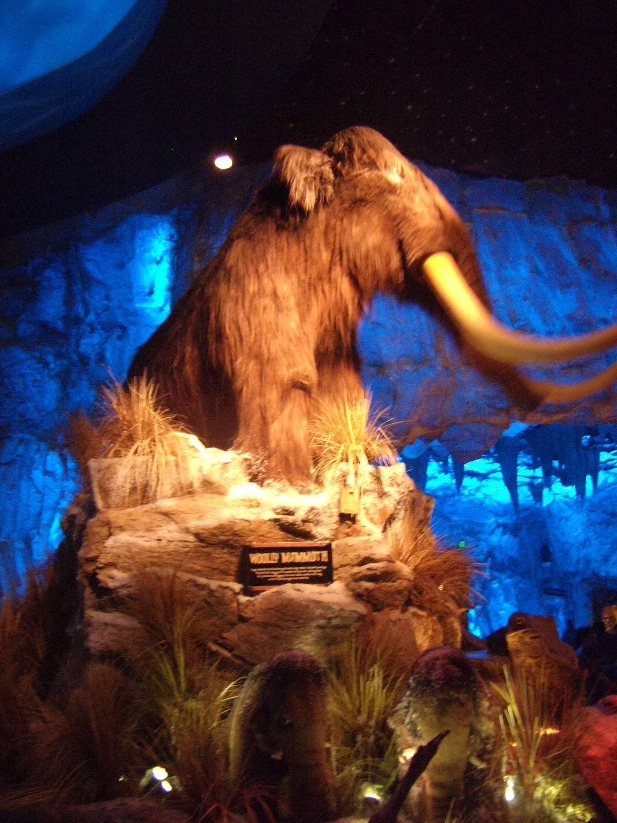 Williams family dining at t rex cafe in downtown disney for Disney dining plan t rex