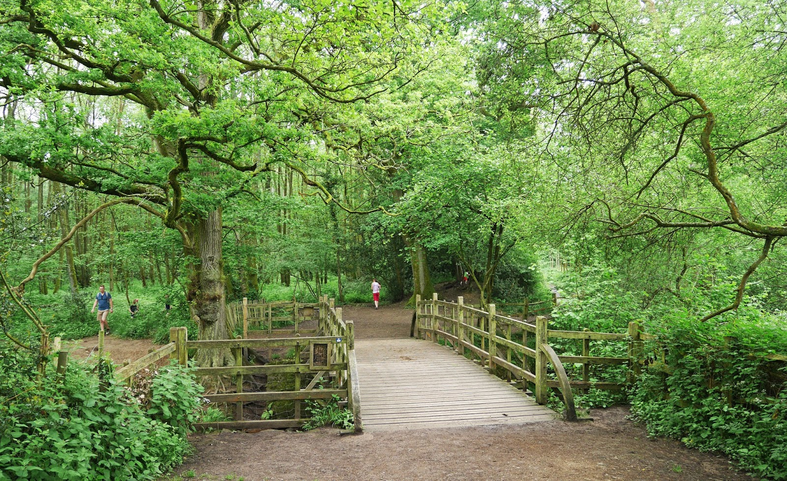 Pooh Bridge, Ashdown Forest