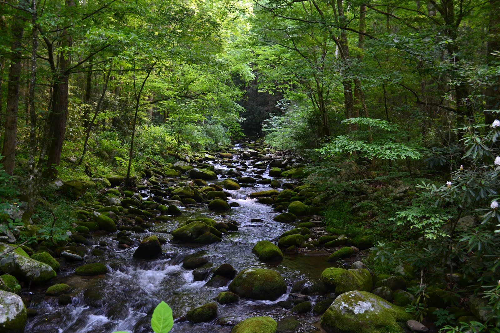 Never A Dull Moment: The Great Smoky Mountain Vacation