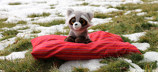 Toy Racoon Resting on a Shelter Pet Bed