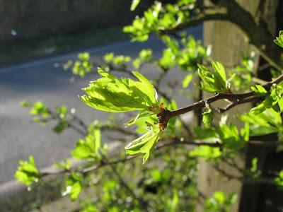 closeup-canon-powershot-leaf