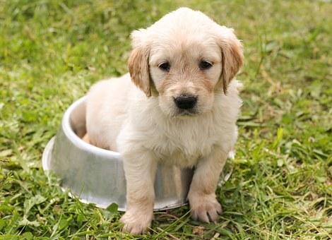 importance of dog food