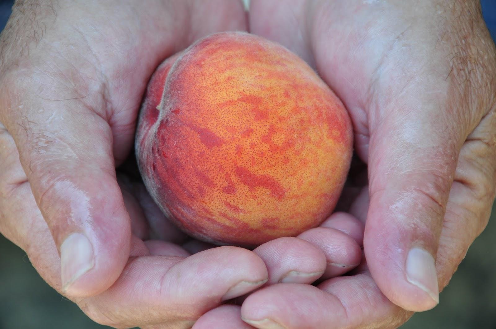 Holding a peach