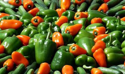 Peluang Usaha Hidroponik  Paprika , Warna-Warni Menguntungkan