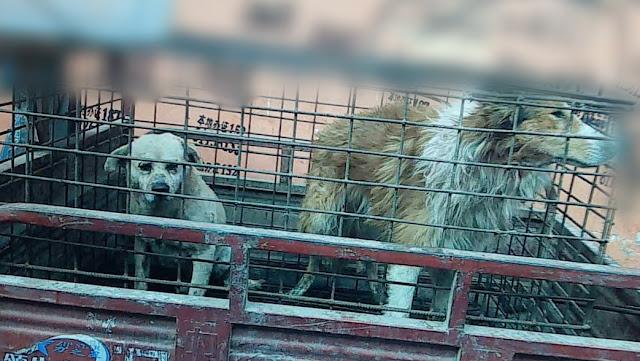 Taiwan se torna o primeiro país da Ásia a proibir o consumo de carne de gato e cachorro