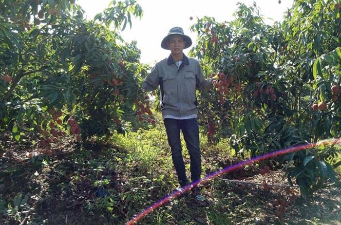 Vải thiều sớm được giá, nông dân Tây Nguyên thu lãi 'khủng'