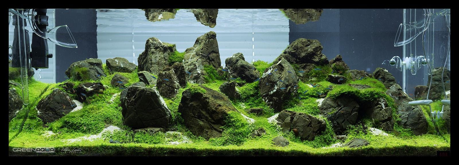 In out thủy tinh luôn hiện diện trong các hồ thủy sinh chuyên nghiệp