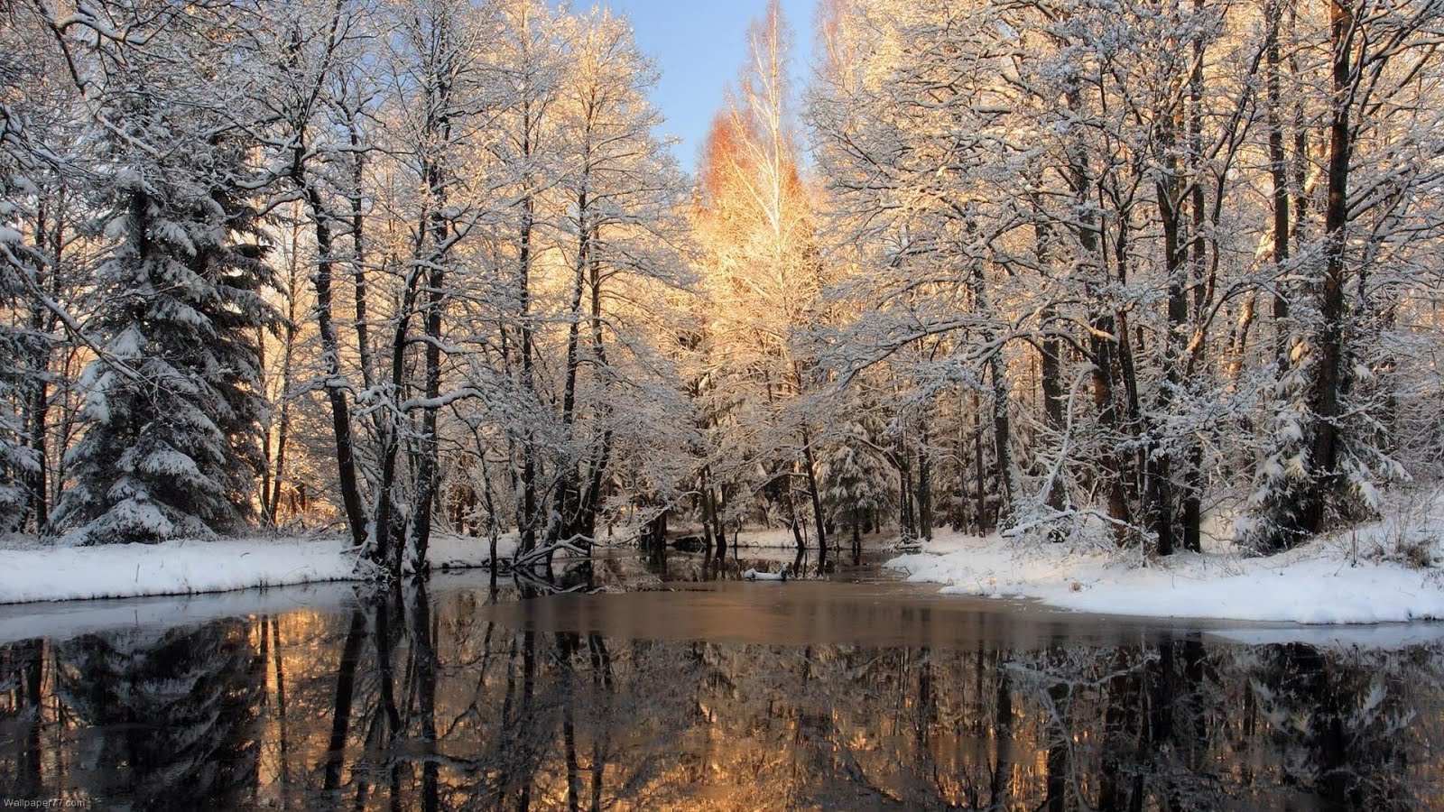Beautiful Winter Forest Wallpaper