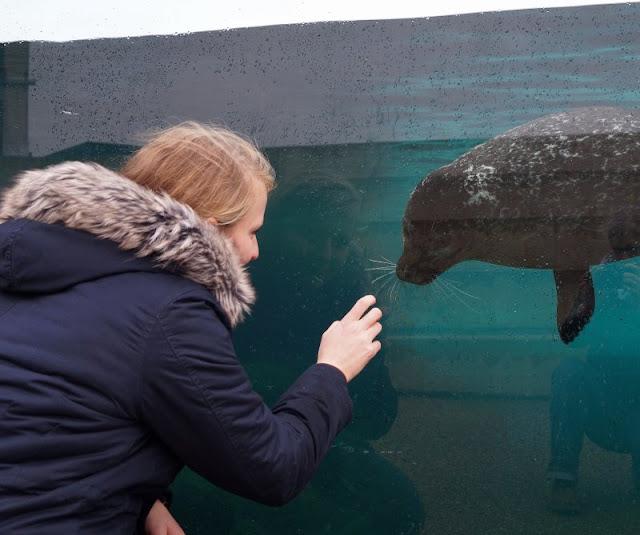 Das Nordsee-Ozeanarium in Hirtshals: Ein tolles Ausflugsziel für Familien in Nord-Jütland. Wir trafen sogar Annika Tooth Meeresbiologin und Robben-Kennerin!