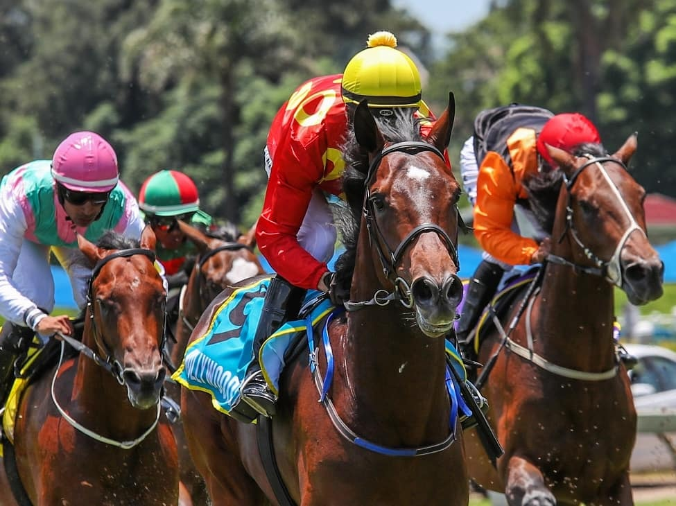 Horse Racing at Hollywoodbets Scottsville with four horses