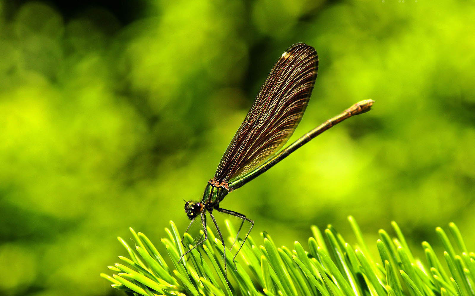Wallpapers Dragonfly Wallpapers