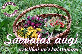 Savvaļas augi