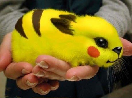 [Image: pokemon+real.bmp]