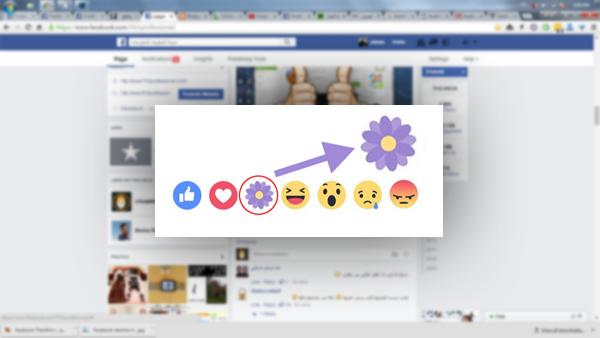 """ما السر وراء اضاف فيسبوك رمز """"الزهرة البنفسجية"""" إلى ازرار الانطباعات ؟"""