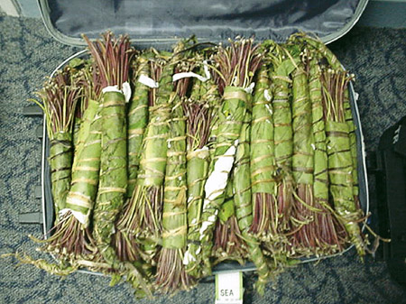 20) Khat (green leafed shrub): makes you feel alert and energised. It is  not particularly addictive or harmful but excessive consumption can lead to  ...