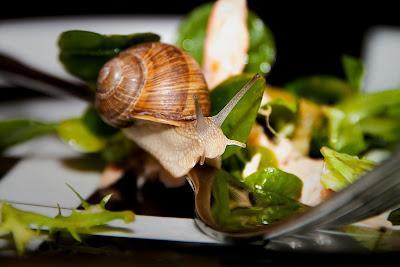 Συνταγές με σαλιγκάρια (χοχλιοί)