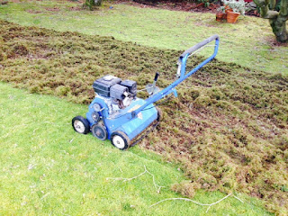 cost to dethatch a lawn